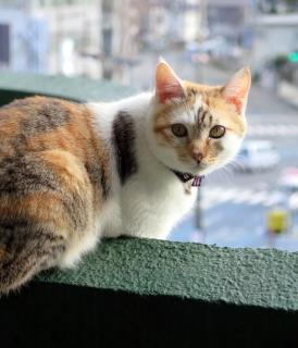 160130_cat04.jpg