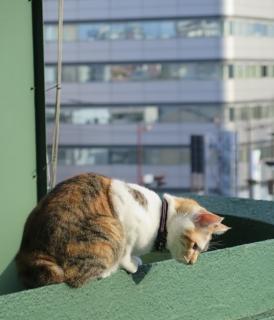 160130_cat05.jpg
