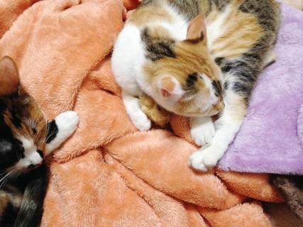 160223_cat01.jpg