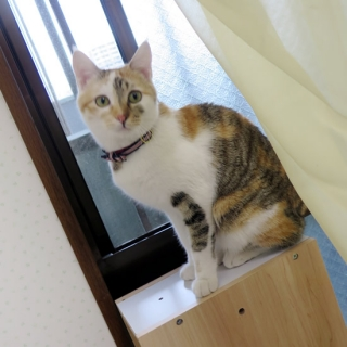 160226_cat08.jpg