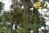 エナガがいた木々