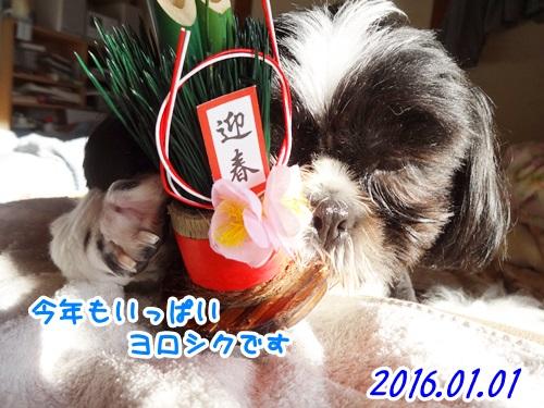 0101-01_20151230205620aee.jpg