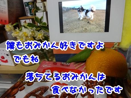 0201-09_20160201192551502.jpg