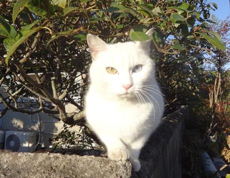1219-cat.jpg