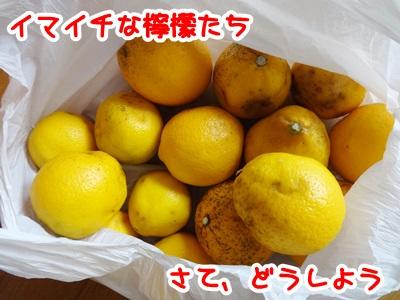 0215-レモン