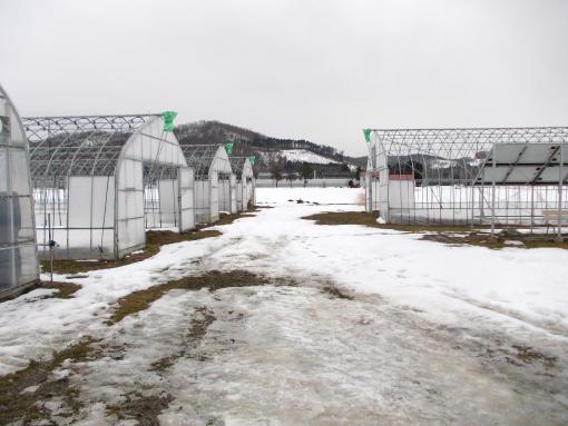 20151215_積雪4cm