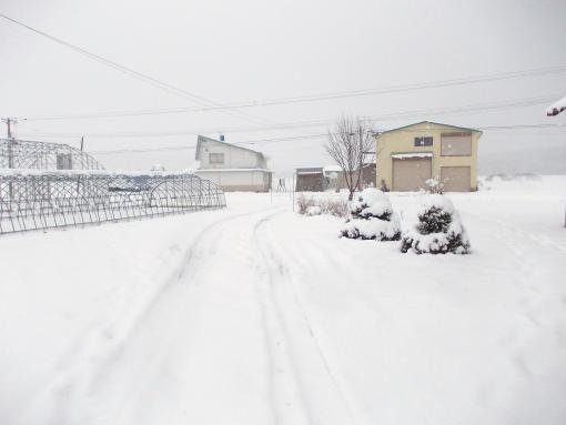 20151218_積雪中