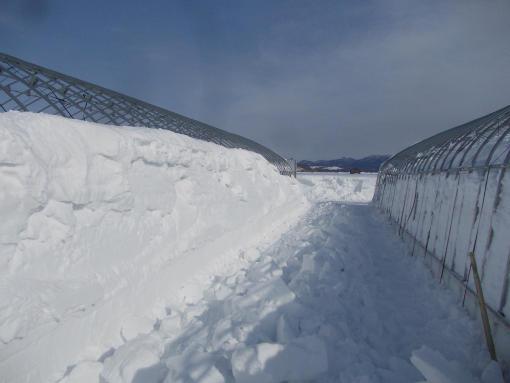 20160303_雪の壁