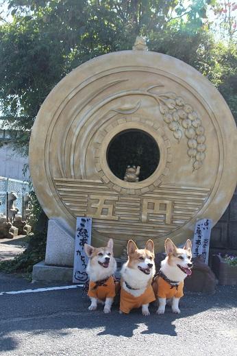 かえる寺1 2015-10-18-3