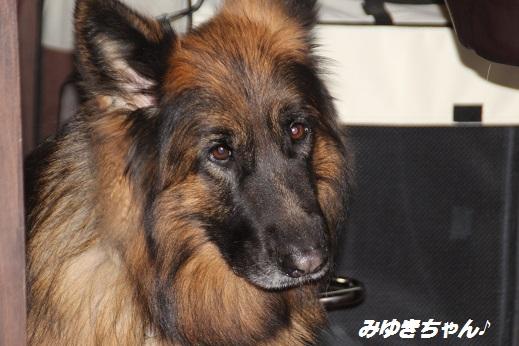 ふらってぃー 2015-11-1-5
