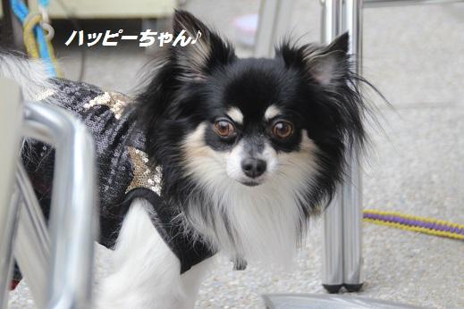 ふらってぃー 2015-11-1-10