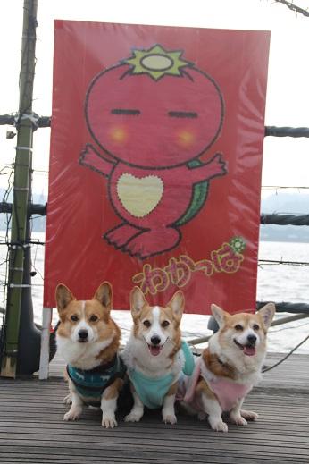 お散歩 2016-1-4-6