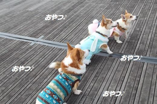 お散歩 2016-1-6-7