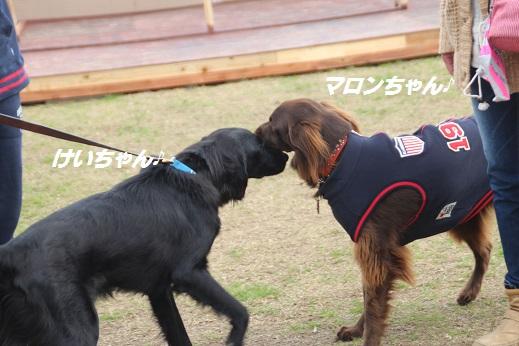 ふらってぃー1 2016-1-10-8