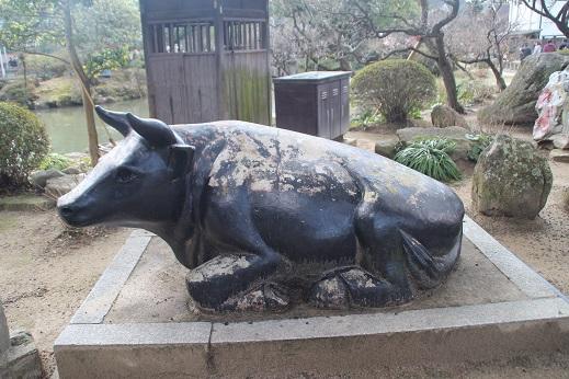 牛さん 2016-1-31-7