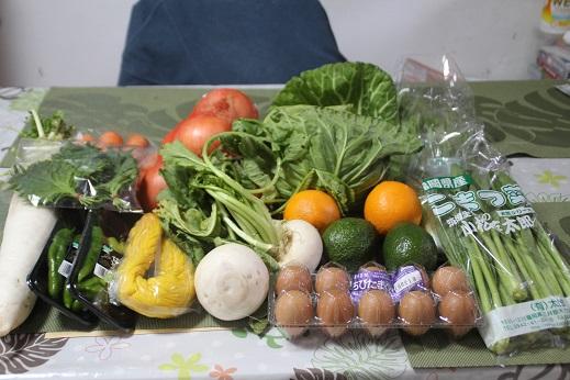 お野菜 2016-2-7