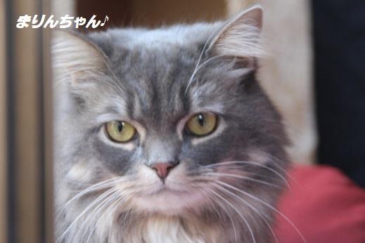 天山さん 2016-2-24-4