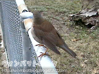 謎の野鳥001