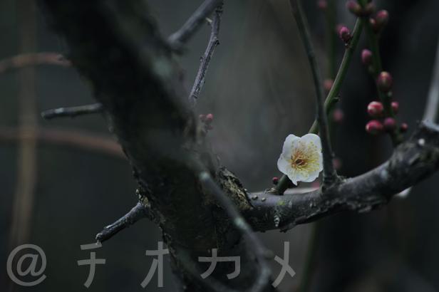_DSC0442.jpg