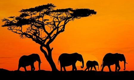 アフリカリーグってなんだよwwww パワプロ