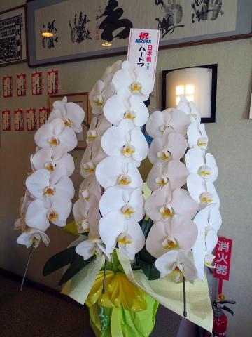 004お花