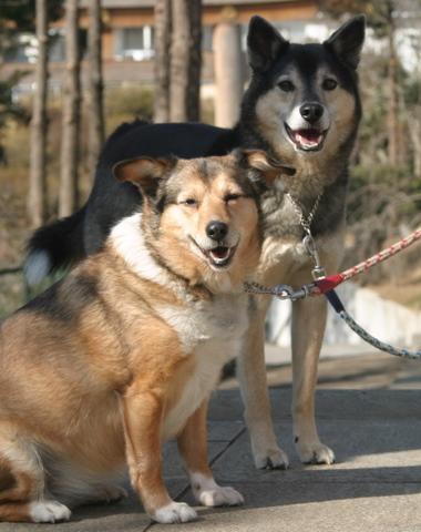 犬たち0149