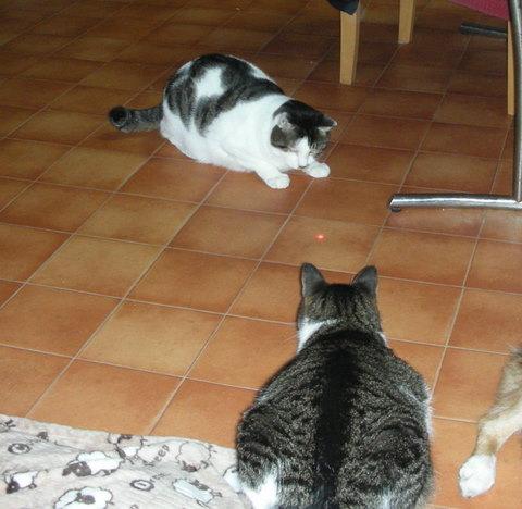 猫たち0180