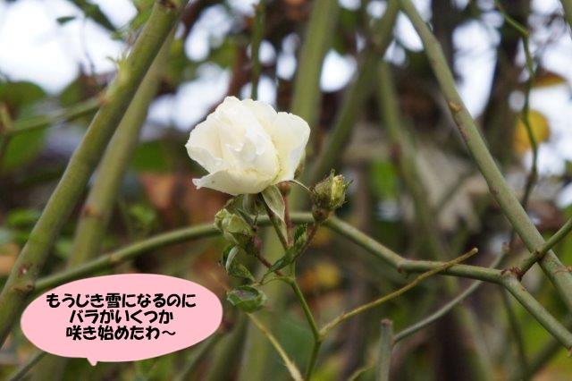 DSC08654.jpg