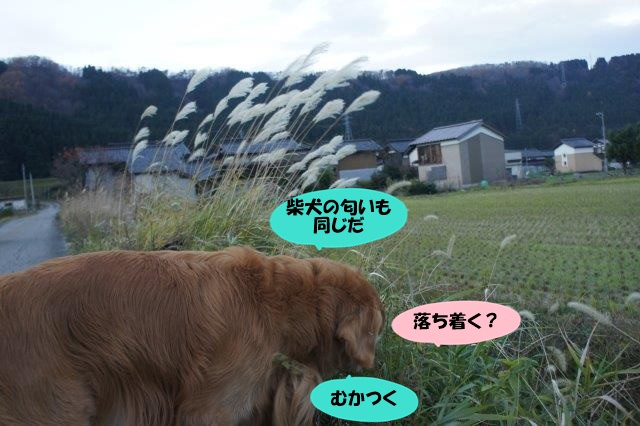 DSC08745.jpg