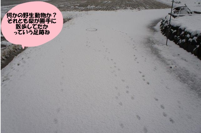 DSC09136.jpg