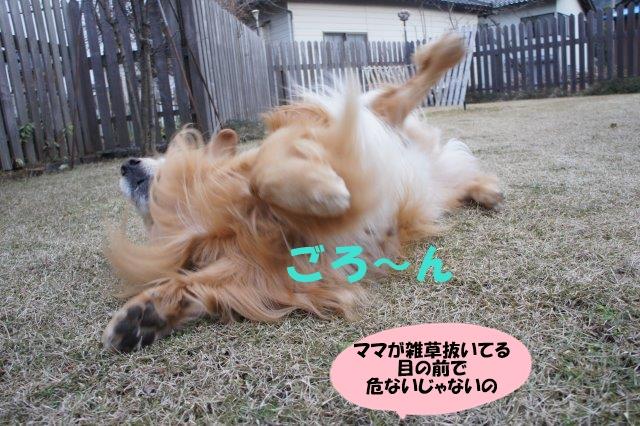 DSC09240.jpg