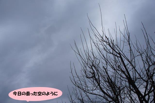 DSC09253.jpg