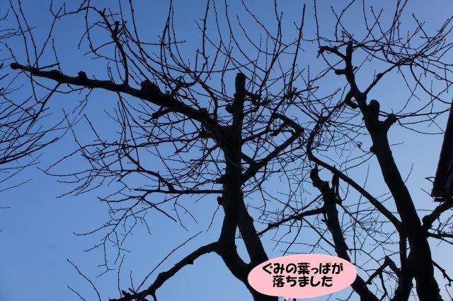 DSC09265.jpg