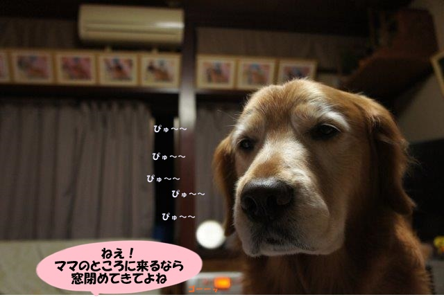 DSC09303.jpg