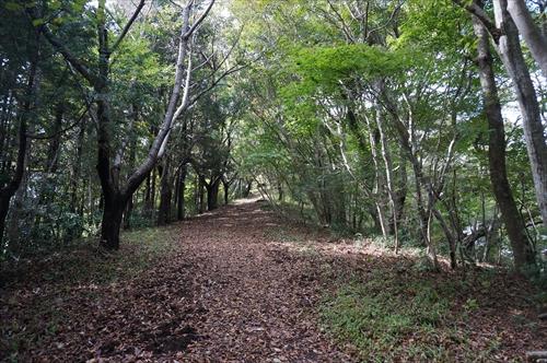 5ハイキング道