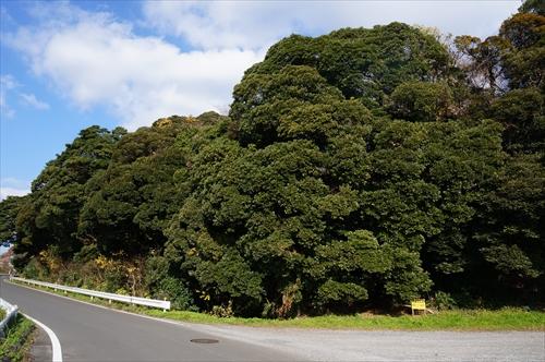 1神社の森
