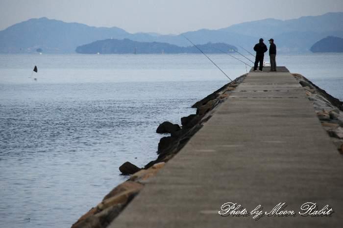 突堤での釣り 愛媛県西条市ひうち