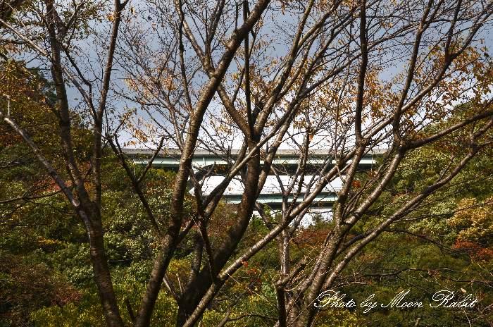 天子川橋 松山自動車道 愛媛県西条市鞍瀬梶