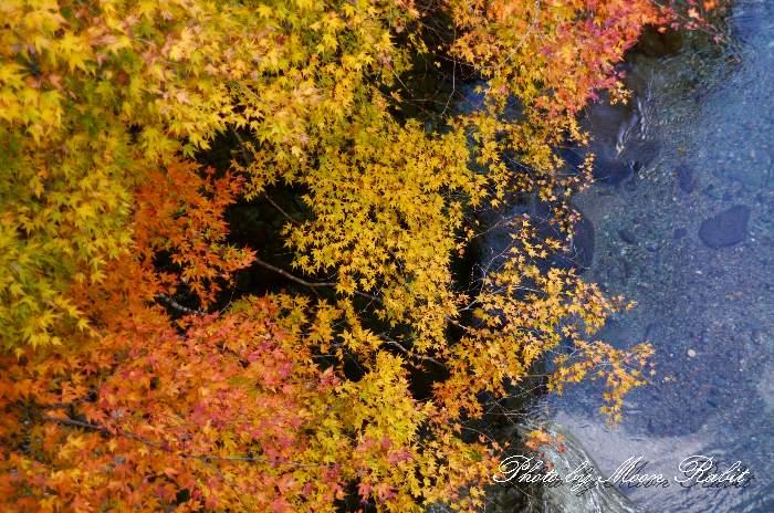 鞍瀬渓谷 紅葉