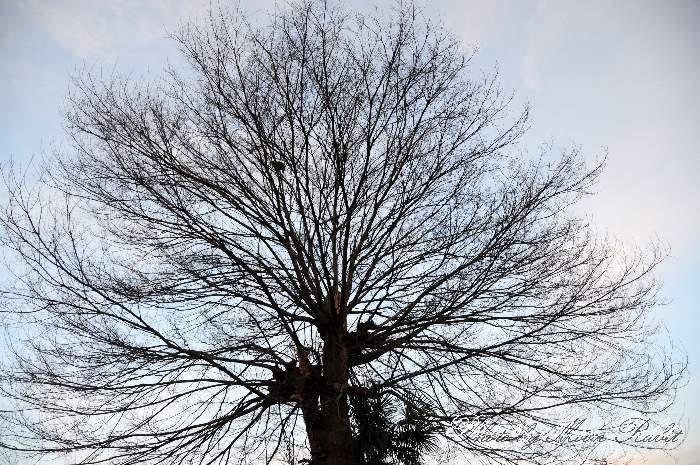 冬の樹 愛媛県西条市岸陰