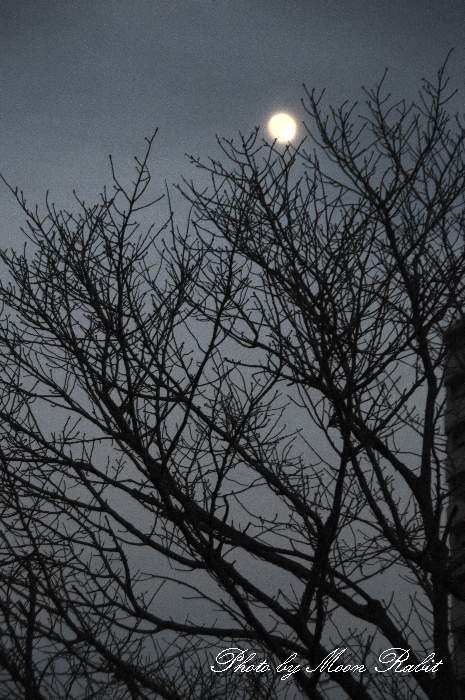 夕暮れの月 愛媛県西条市上神拝