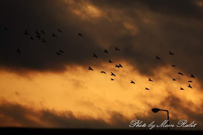 鳩が飛ぶ 愛媛県西条市古川 古川橋