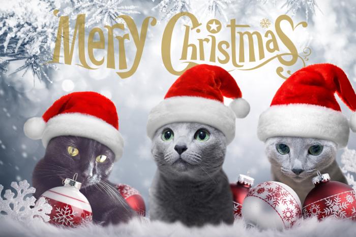 2015クリスマス
