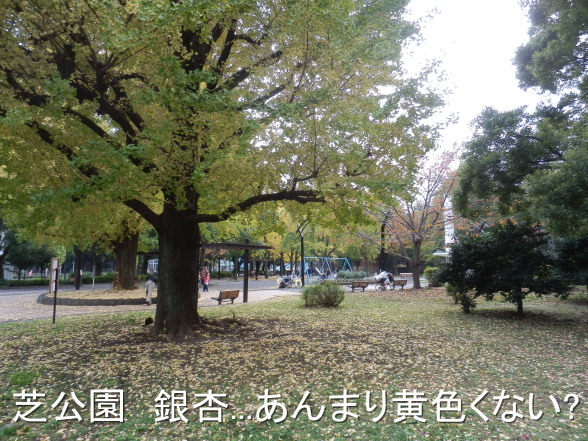 20151122 銀杏