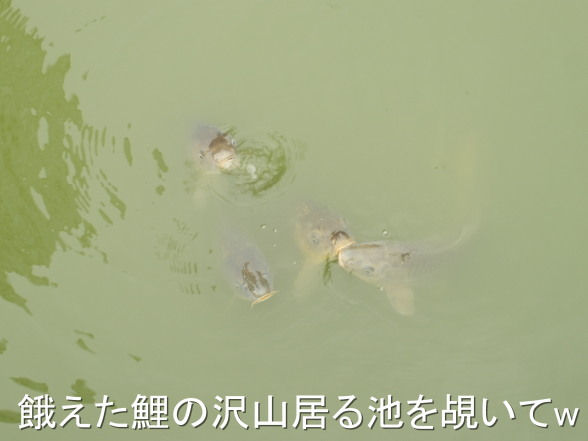 20151122 鯉