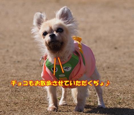 omdP2113984.jpg