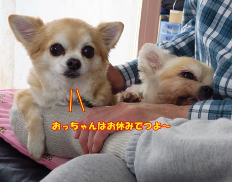 sx700IMG_9308.jpg