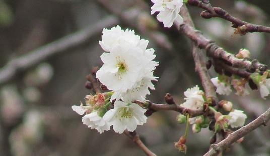 edogawa151227-102.jpg