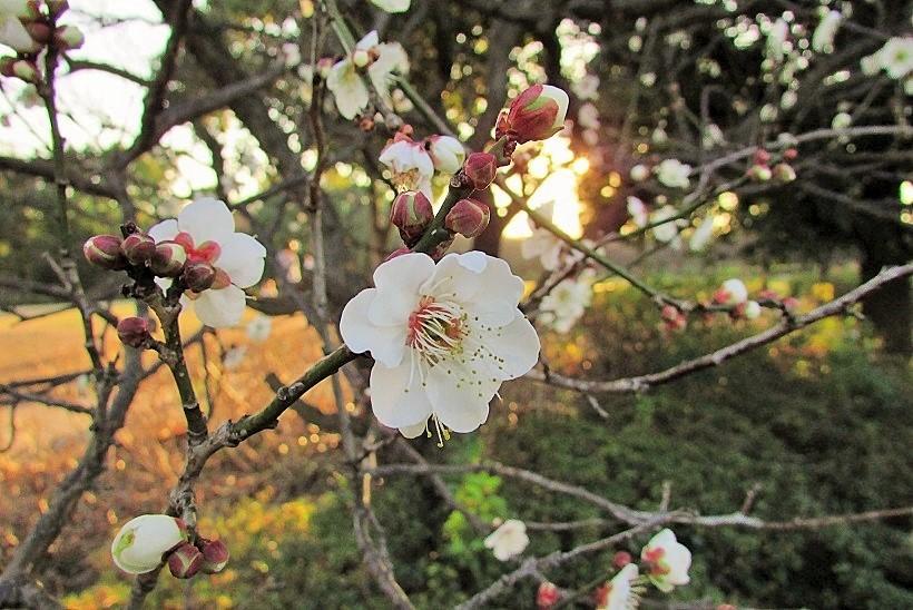 koshigaya160104-101.jpg