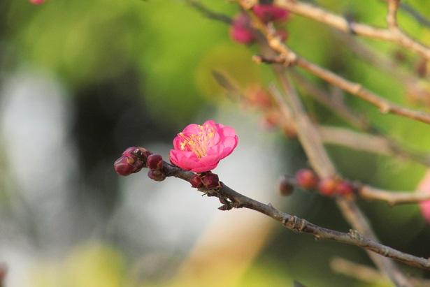 koshigaya160104-107.jpg